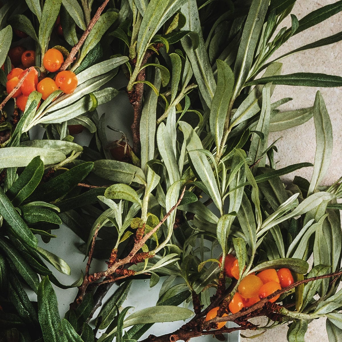LUMI Kaamos scent features sea buckthorn