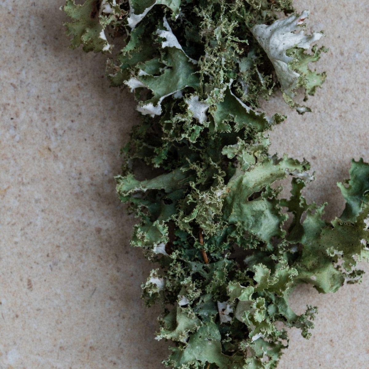 LUMI Ruska scent features lichen